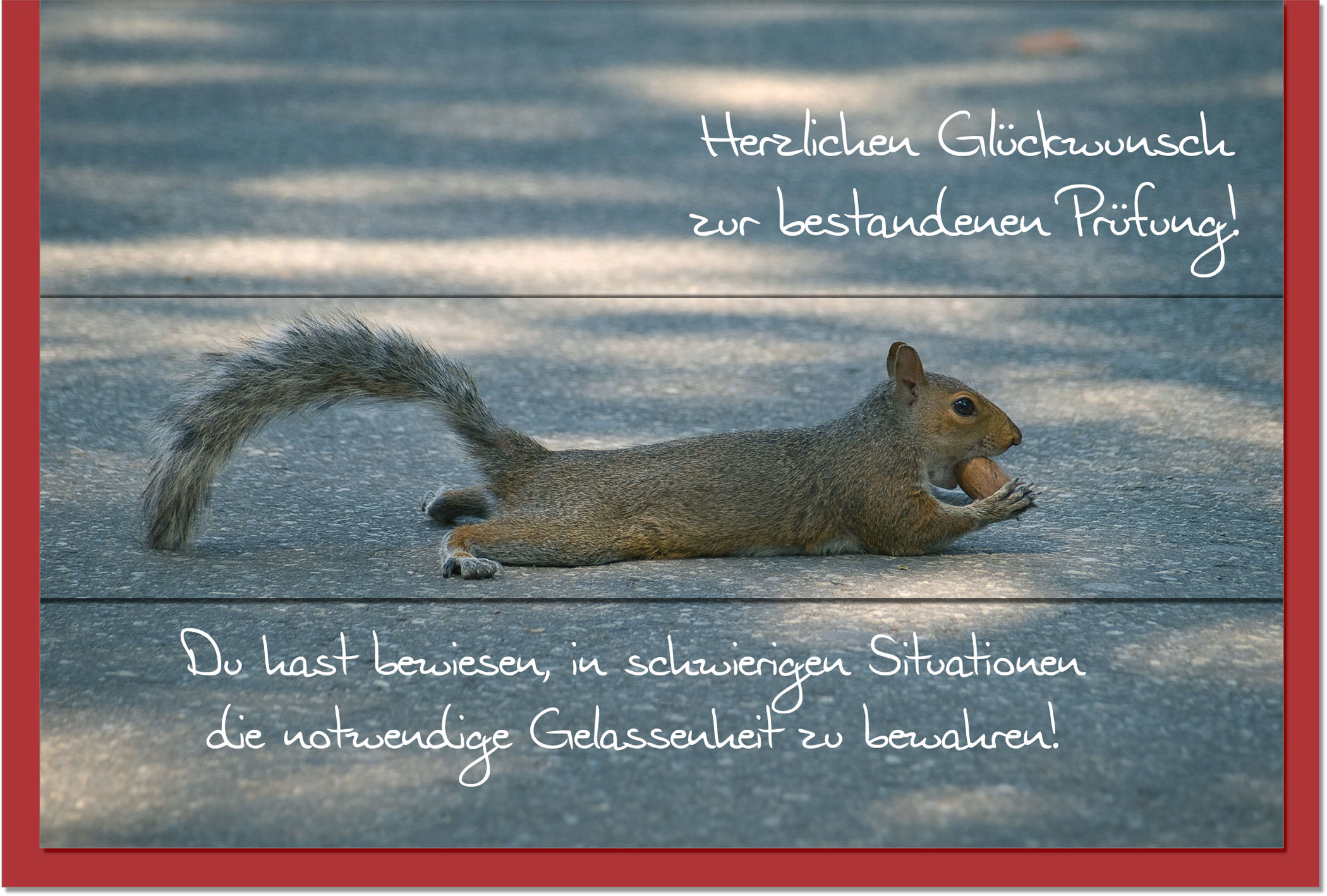 Prüfungskarten / Grußkarten /Prüfung Eichhörnchen