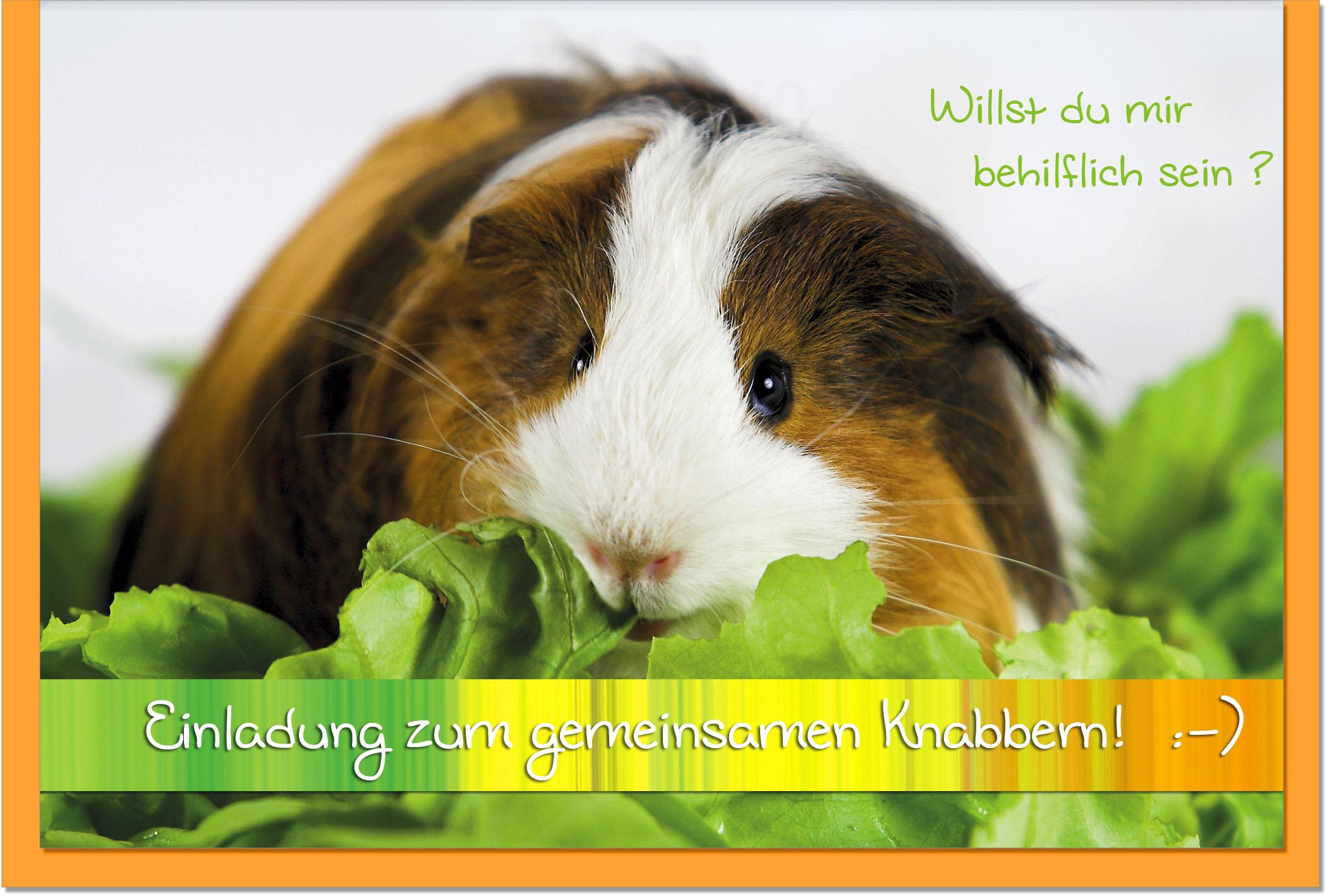 Einladungskarten / Grußkarten /Einladung Hamster