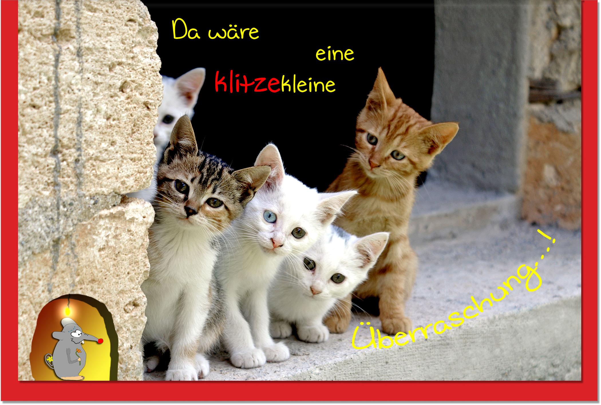 Geburtstagskarten / Grußkarten /Geburtstag Katzen