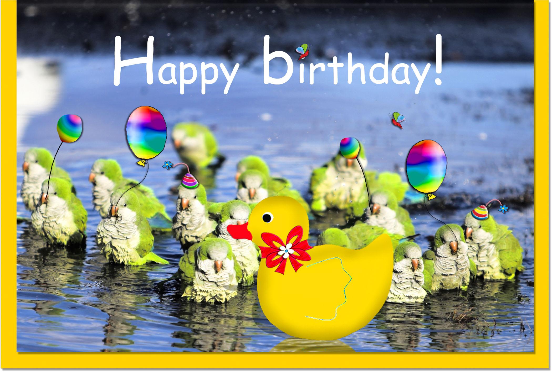 Geburtstagskarten / Grußkarten /Geburtstag Ente