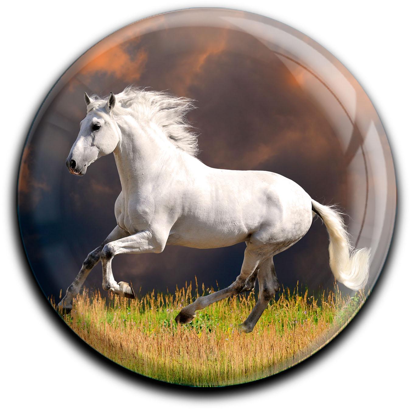 """metALUm Premium Magnete rund """"Weißes Pferd"""""""