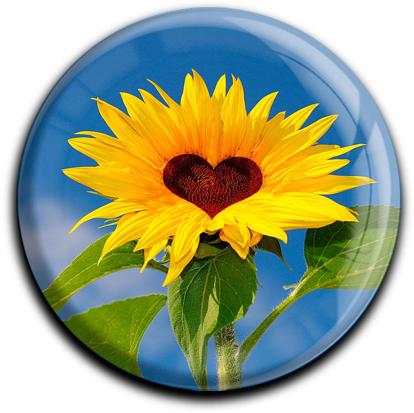 """metALUm Premium Magnete rund """"Sonnenblume"""""""
