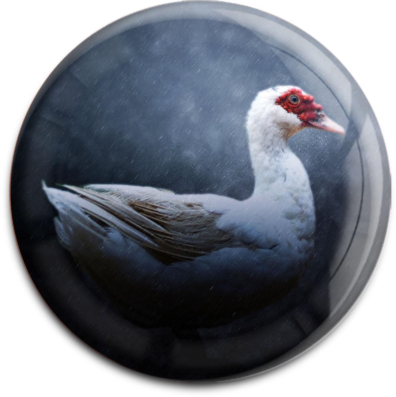 Magnet / Kühlschrankmagnet / Ente / Wildtiere