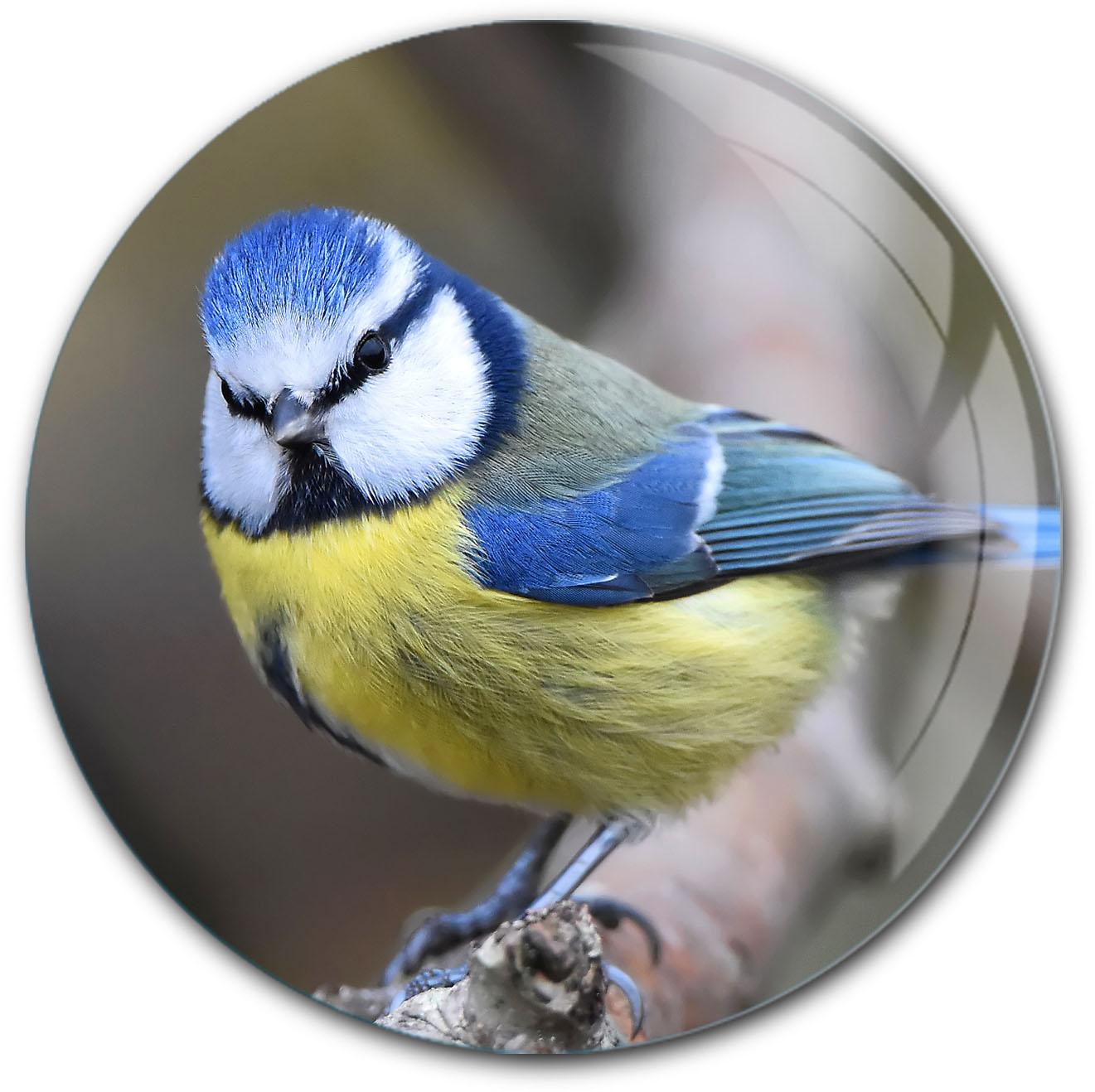 Magnet / Kühlschrankmagnet / Meise / Vögel