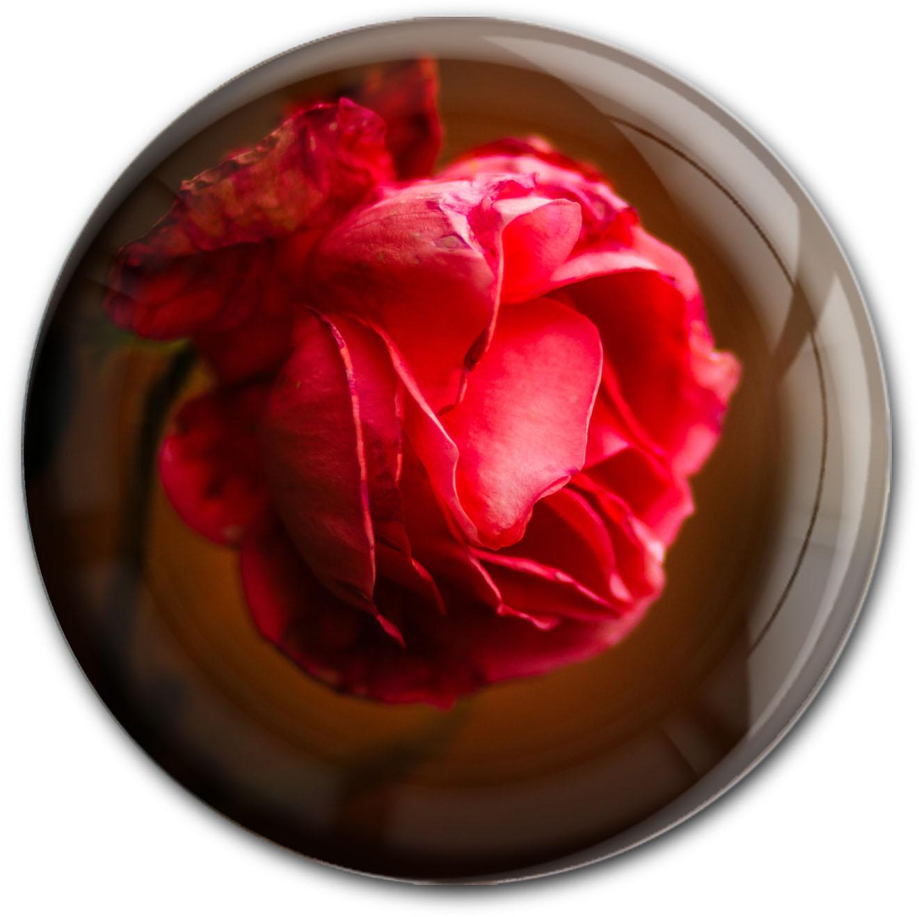 Magnet / Kühlschrankmagnet / Rose