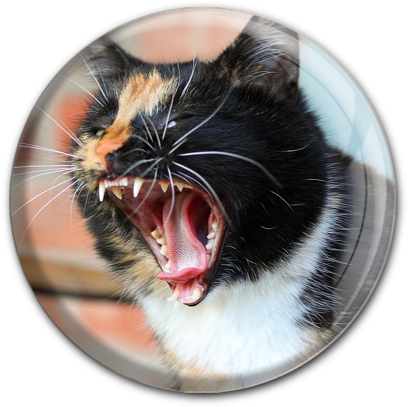 Magnet / Kühlschrankmagnet / Katze