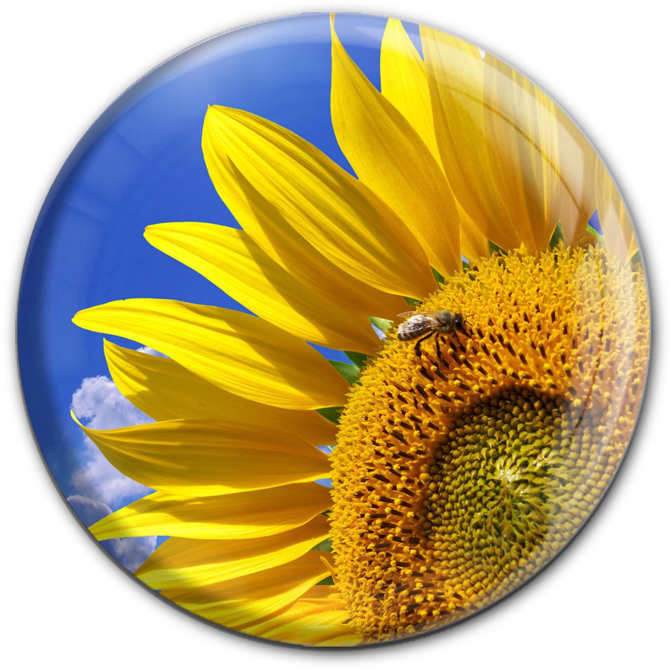 Magnet / Kühlschrankmagnet / Sonnenblume