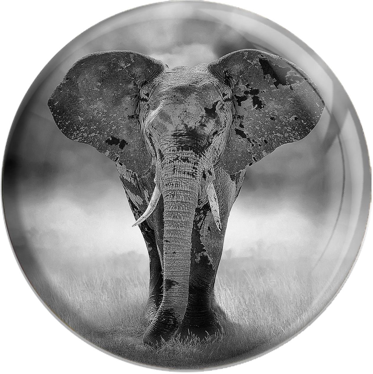Magnet / Kühlschrankmagnet / Elefant / Wildtiere