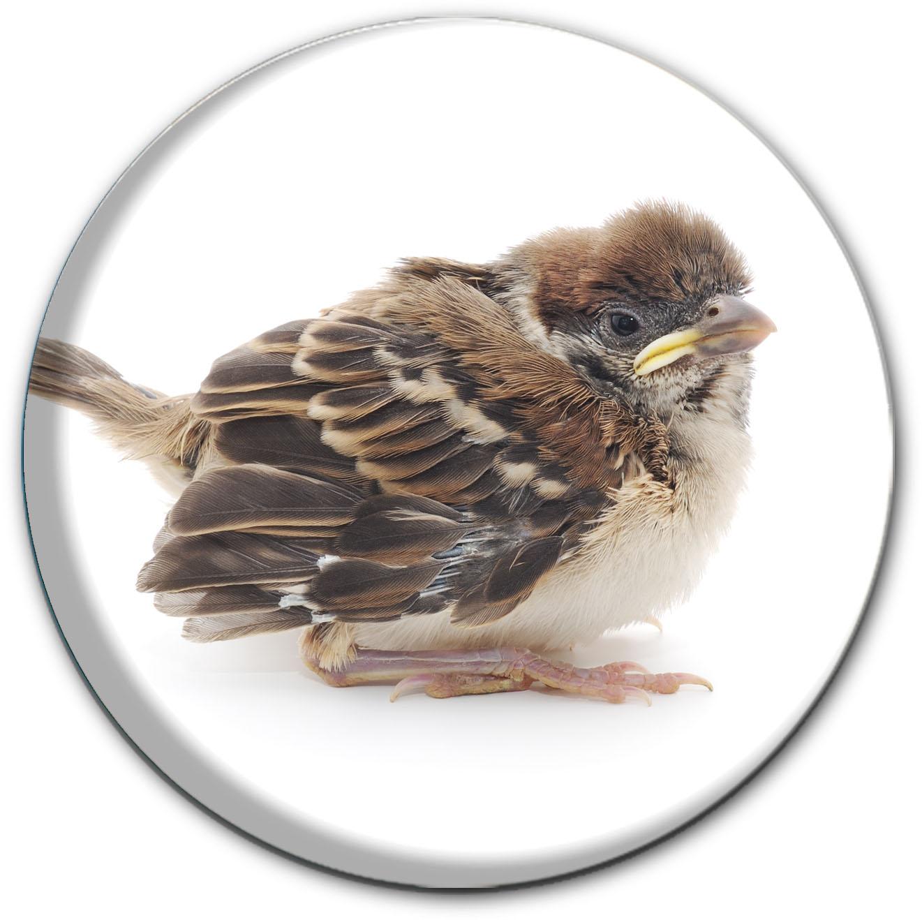 Magnet / Kühlschrankmagnet / Vogel