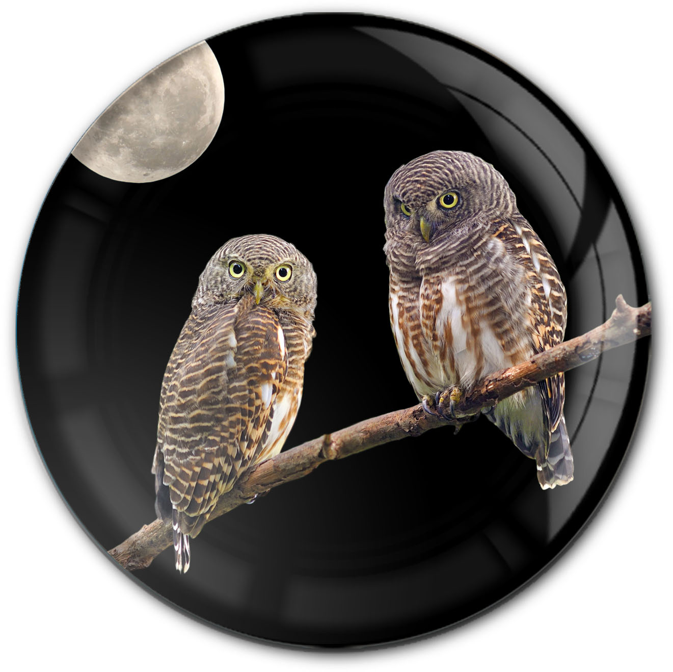 Magnet / Kühlschrankmagnet / Eulen / Raubtiere / Wildvögel