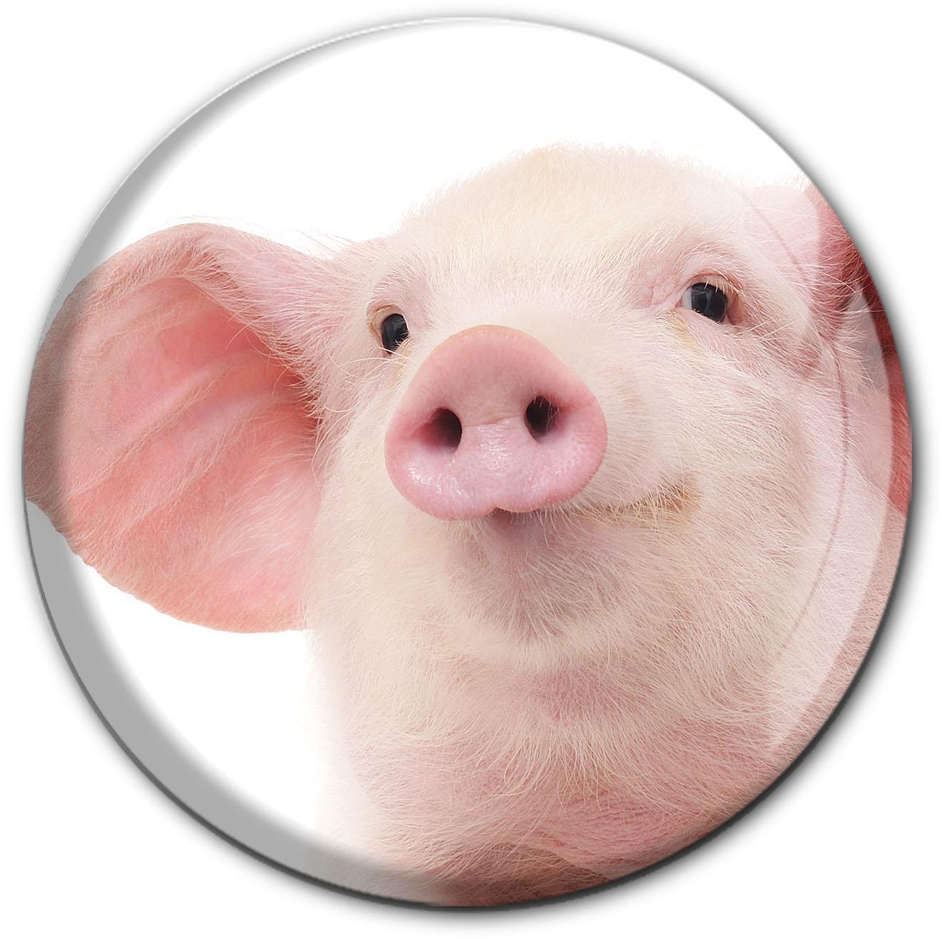 Magnet / Kühlschrankmagnet / Schwein