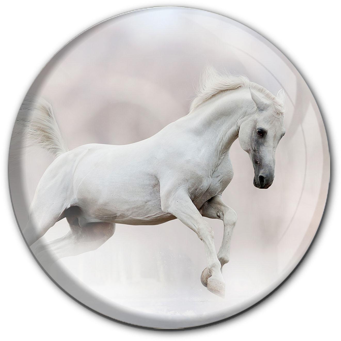 Magnet / Kühlschrankmagnet / Pferd