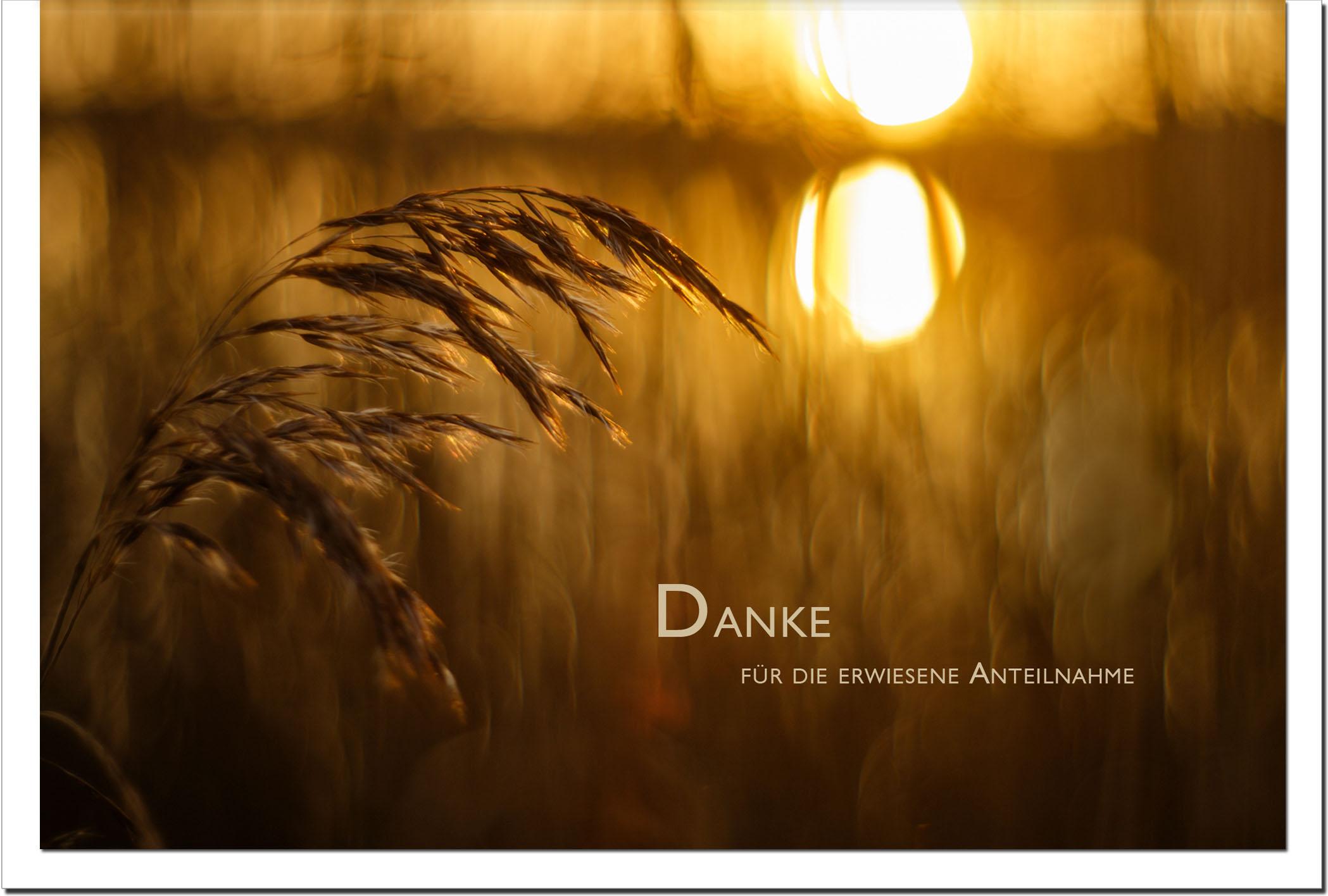 Danksagung Danksagungskarten / Korn / Sonnenuntergang / Stilvoll Niveauvoll Einfühlsam