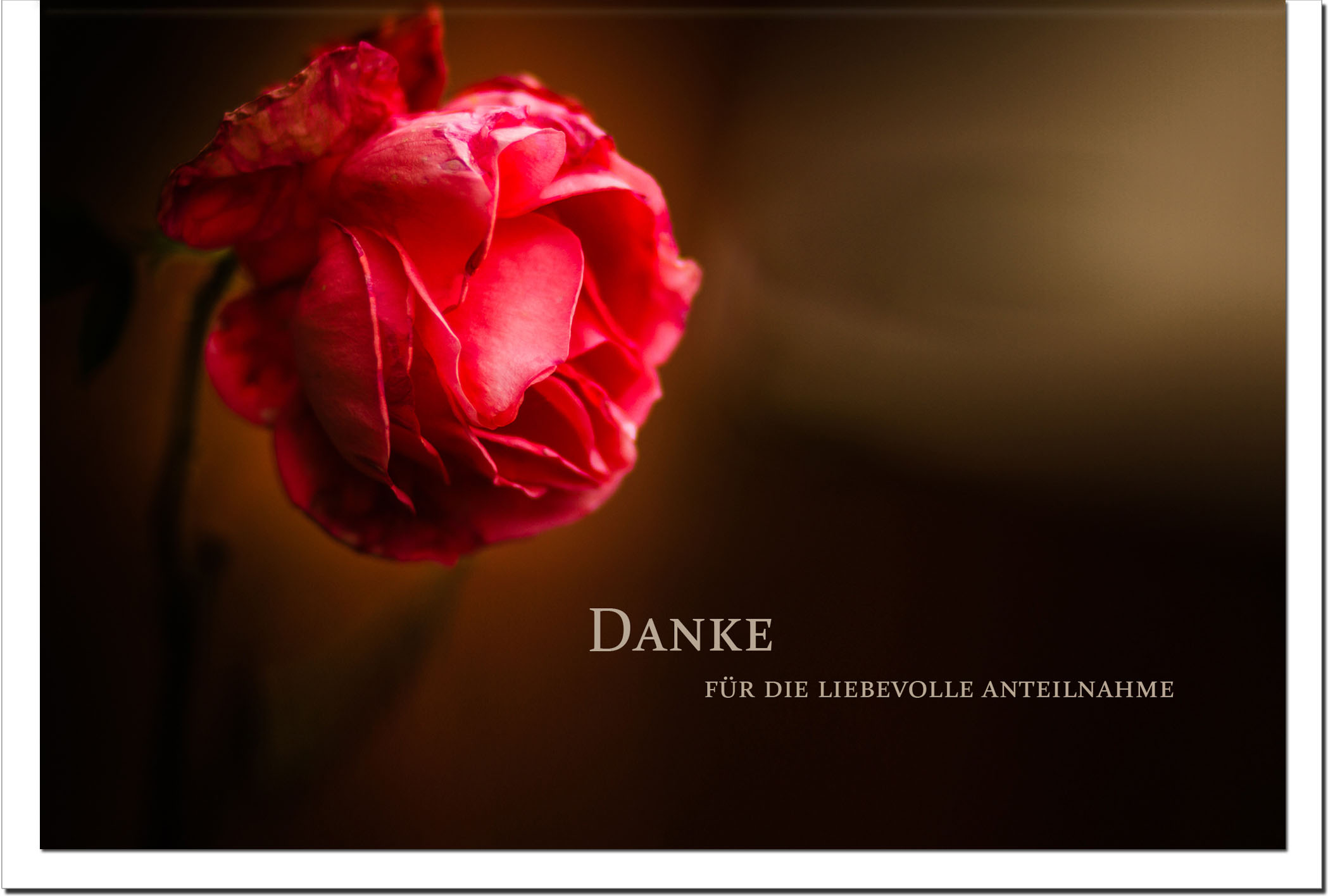 Danksagung Danksagungskarten / Rose / Stilvoll Niveauvoll Einfühlsam