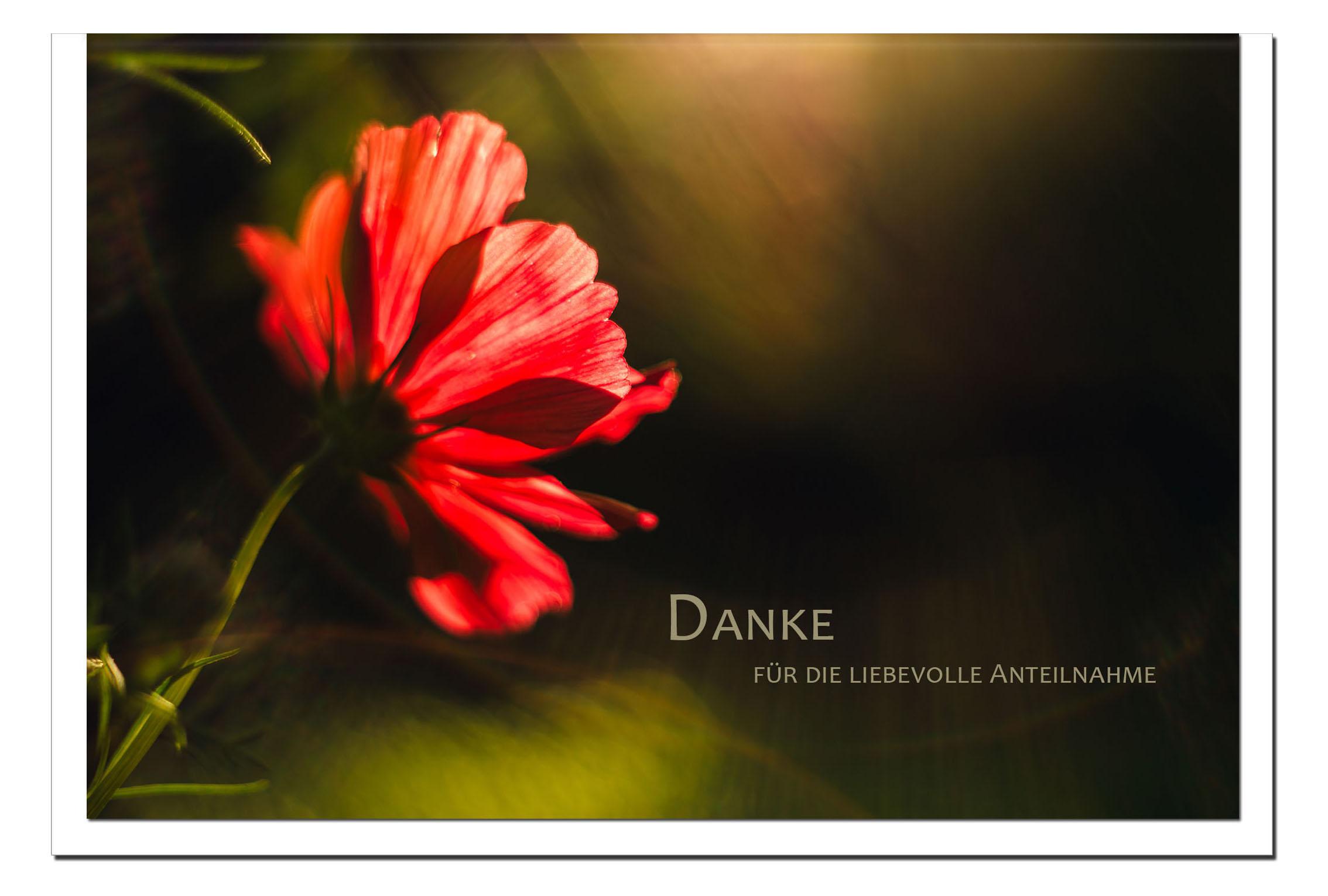 Danksagung Danksagungskarten / Anemone / Stilvoll Niveauvoll Einfühlsam