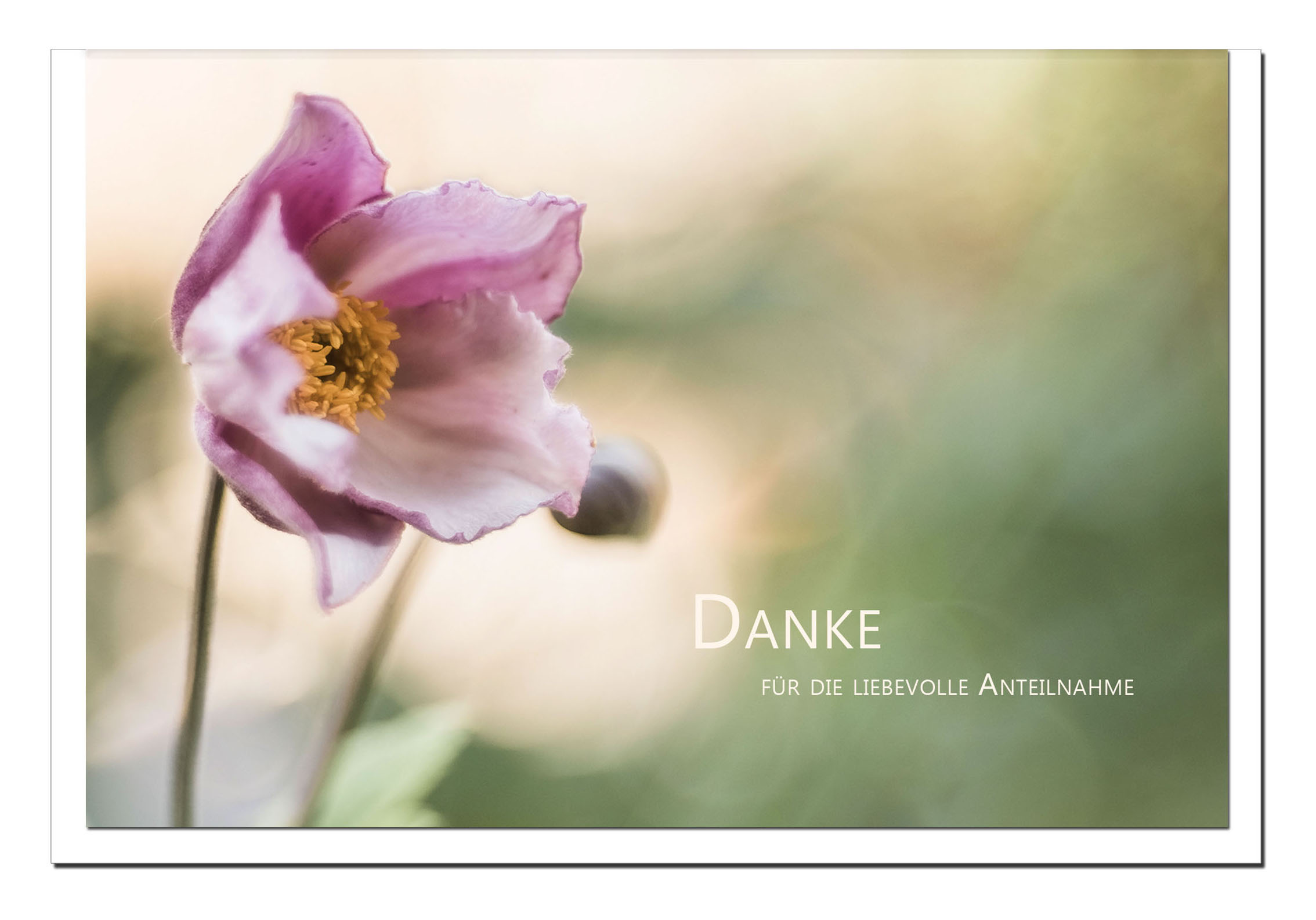 Danksagung Danksagungskarten / Christrose / Stilvoll Niveauvoll Einfühlsam
