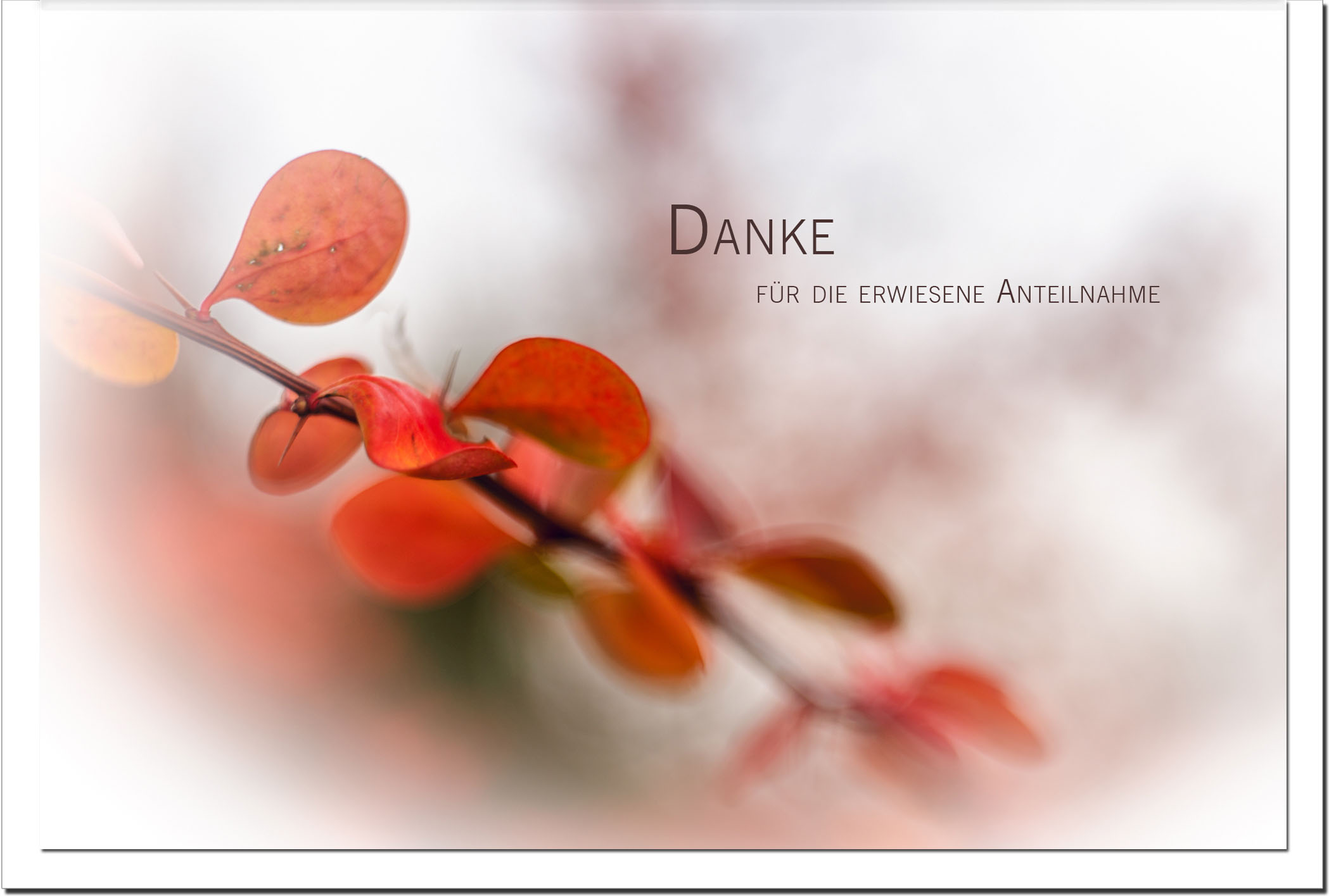 Danksagung Danksagungskarten / Herbst / Stilvoll Niveauvoll Einfühlsam