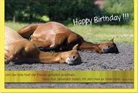 Geburtstagskarten / Grußkarten /Geburtstag Pferde
