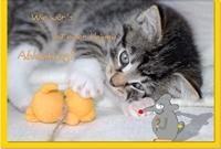Grußkarten /Verschiedenes Katze