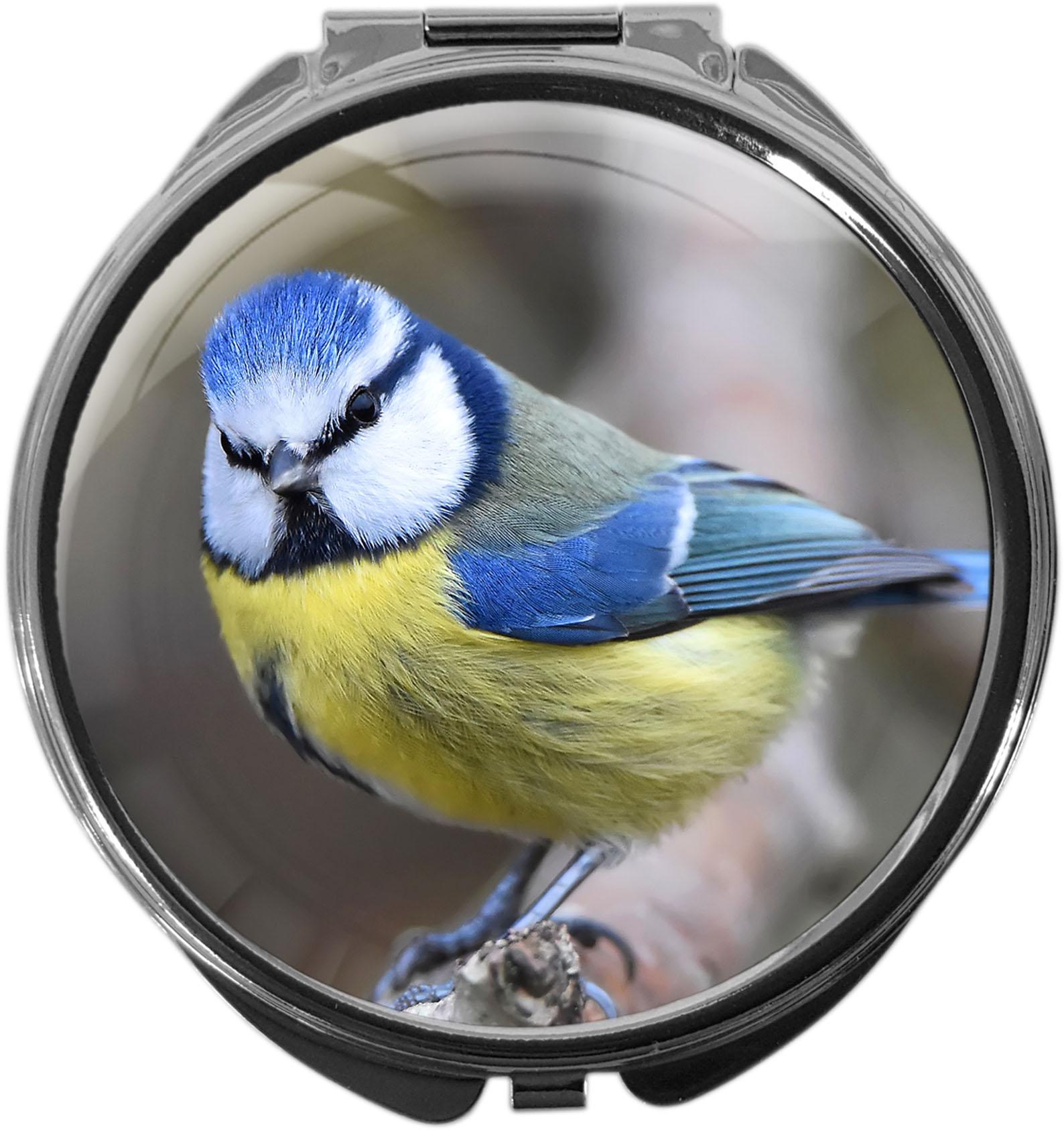 Pillendose / Meise / Vögel