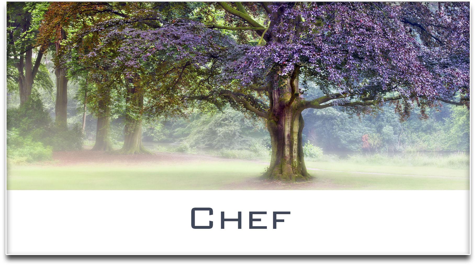 Türschild / Haustürschild / Buche / Baum / Chef / Selbstklebend