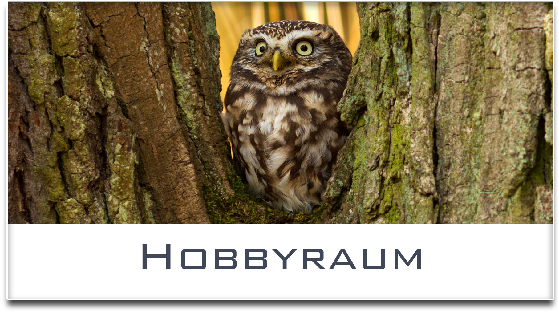 Türschild / Haustürschild / Eule / Hobbyraum / Selbstklebend