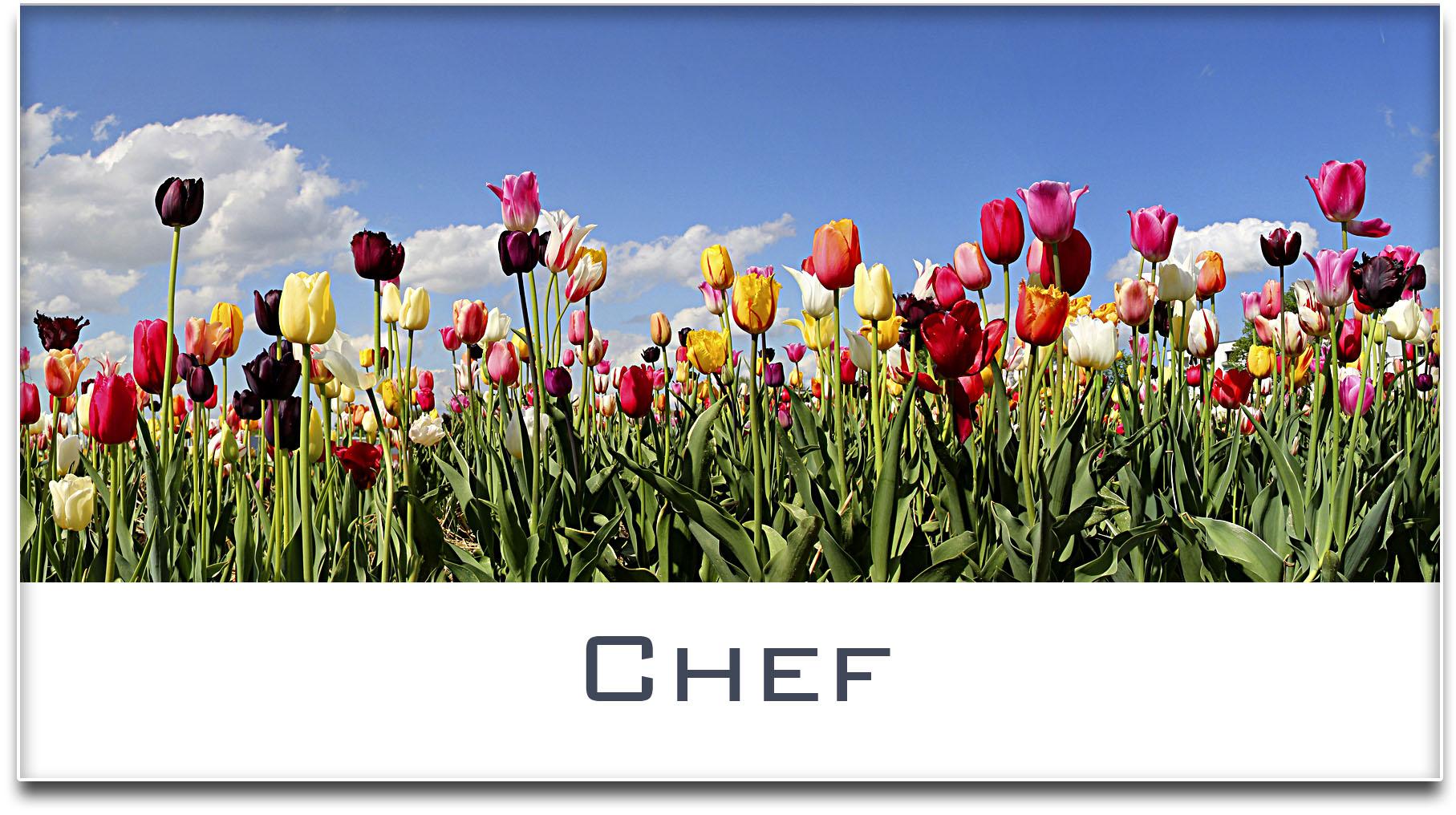 Türschild / Haustürschild / Tulpenfeld / Chef / Selbstklebend