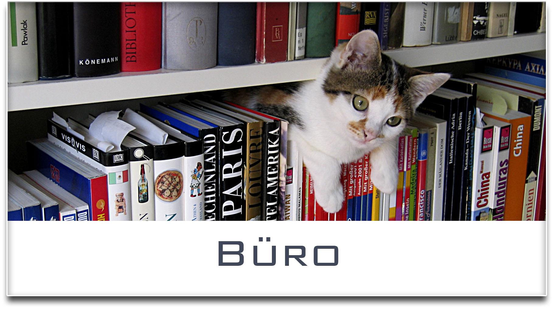 Türschild / Haustürschild / Katze / Bücherregal / Büro / Selbstklebend