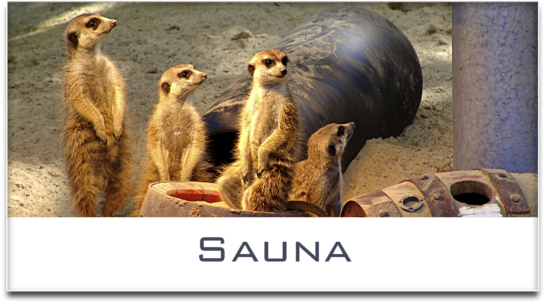 Türschild / Haustürschild / Erdmännchen / Sauna / Selbstklebend