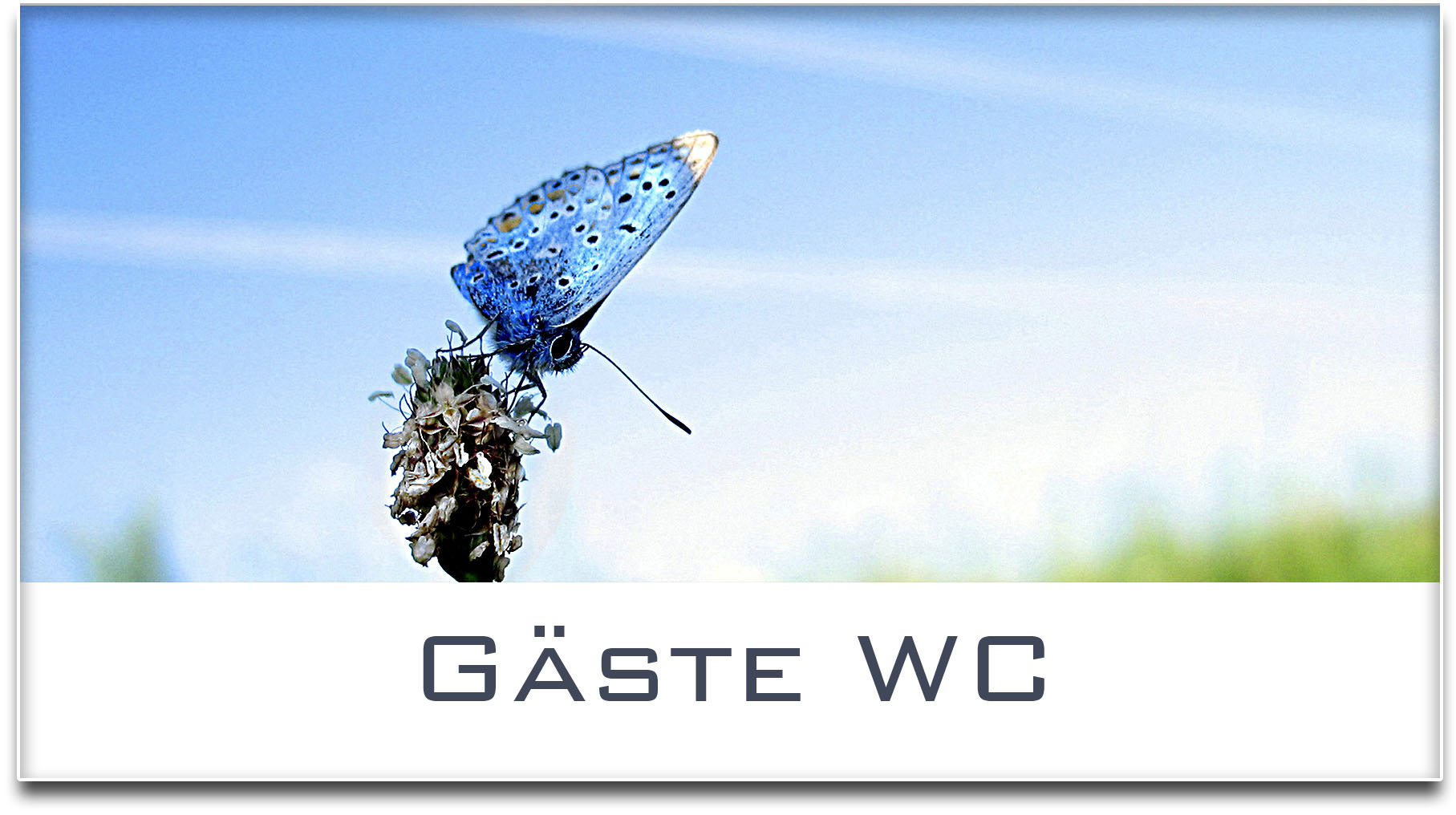 Türschild / Haustürschild / Schmetterling / Gäste WC / Selbstklebend