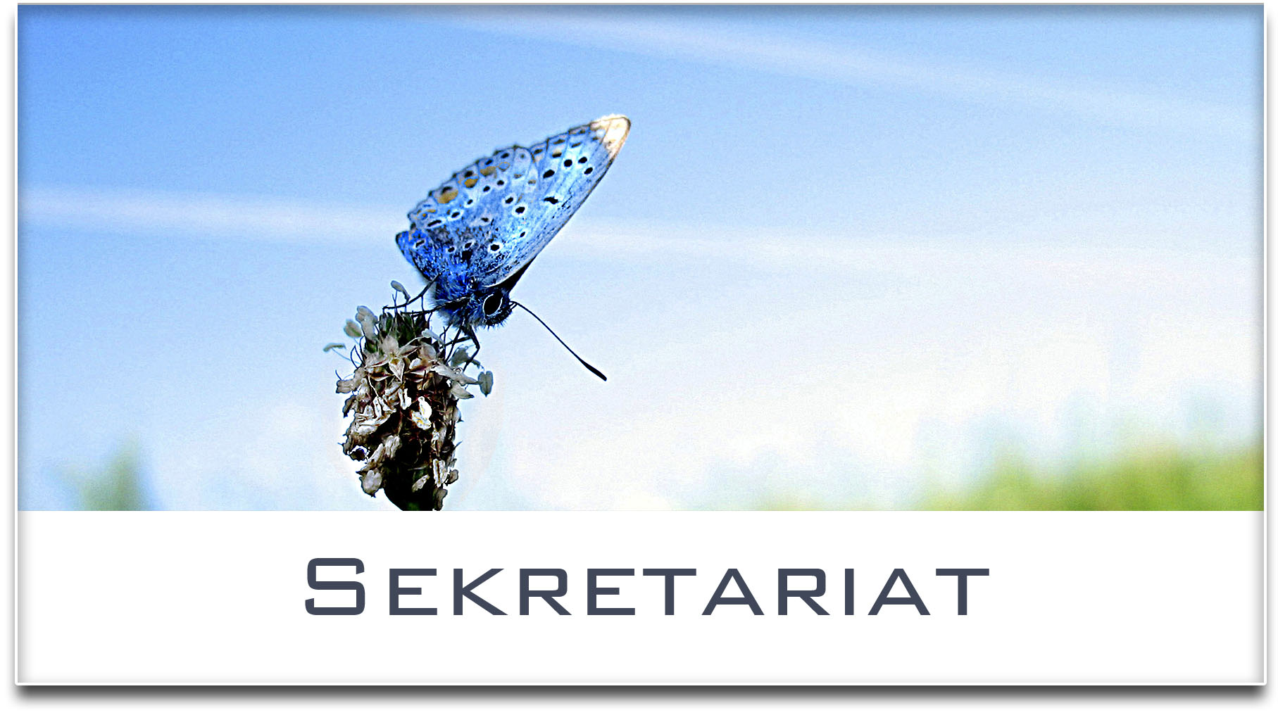 Türschild / Haustürschild / Schmetterling / Sekretariat / Selbstklebend