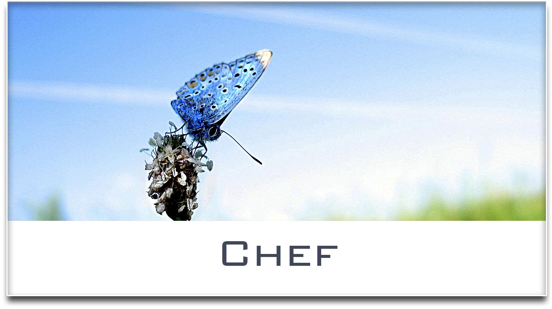 Türschild / Haustürschild / Schmetterling / Chef / Selbstklebend