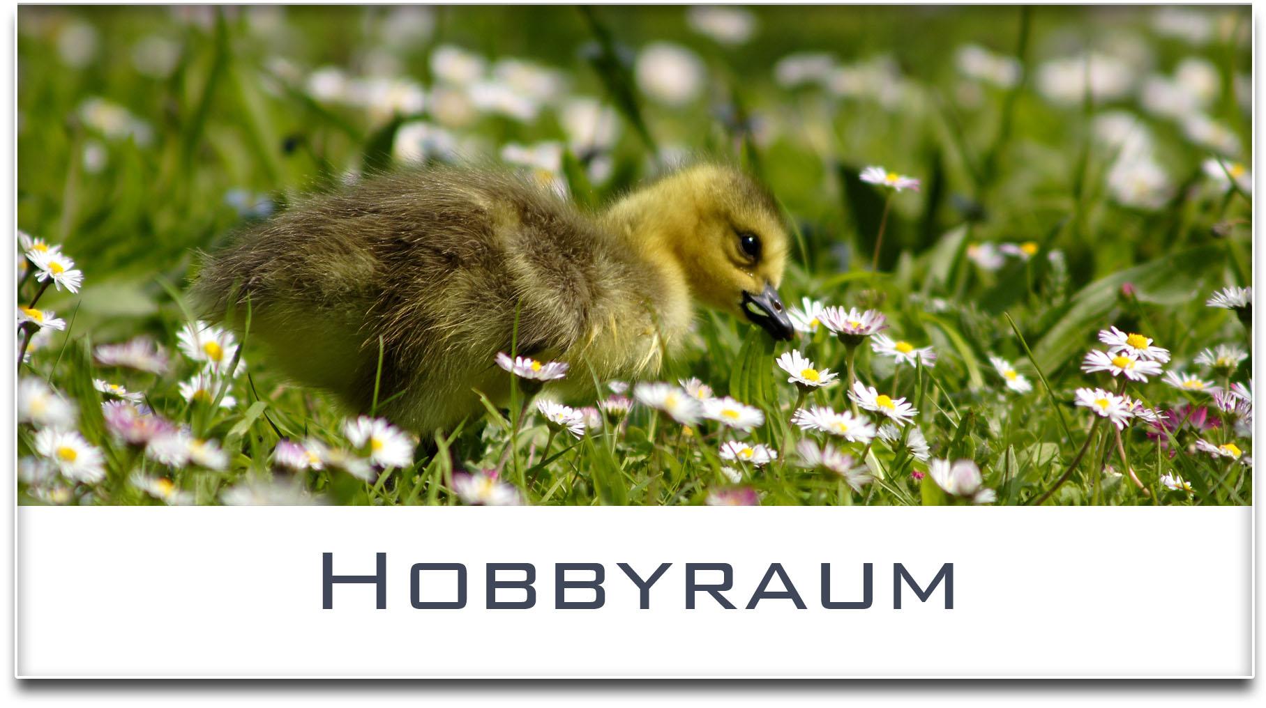 Türschild / Haustürschild / Entenküken / Hobbyraum / Selbstklebend