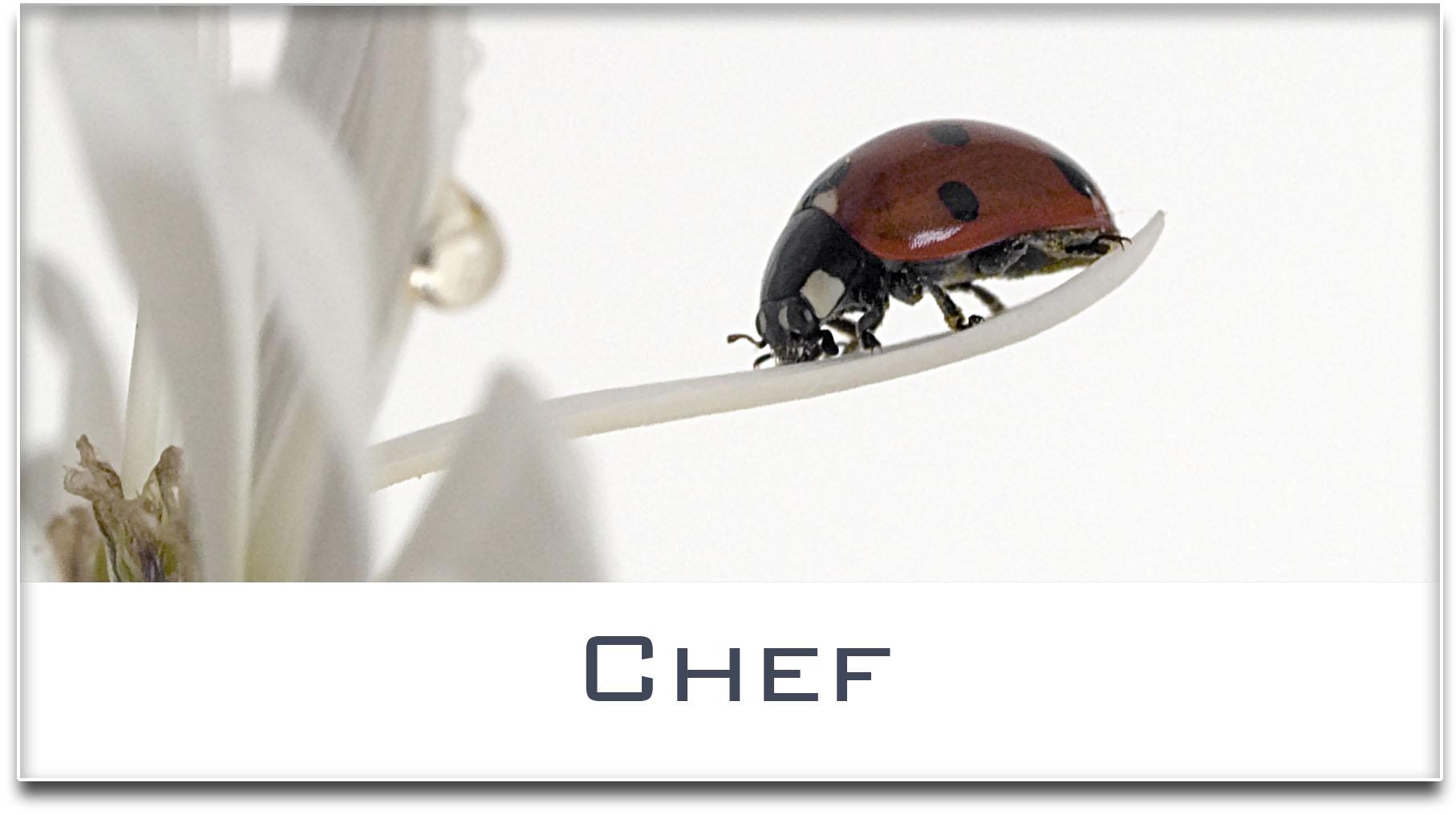 Türschild / Haustürschild / Marienkäfer / Chef / Selbstklebend