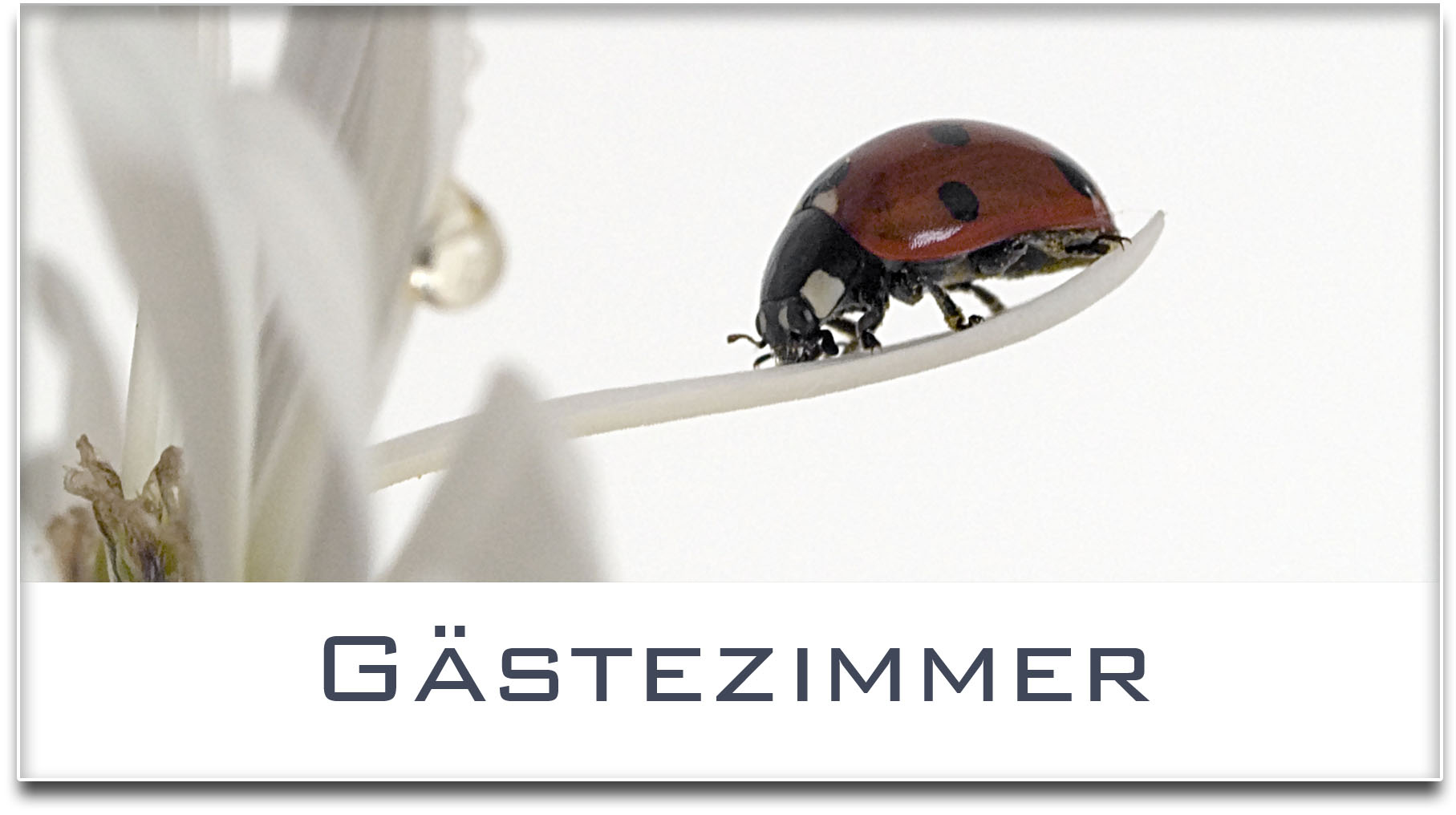 Türschild / Haustürschild / Marienkäfer / Gästezimmer / Selbstklebend