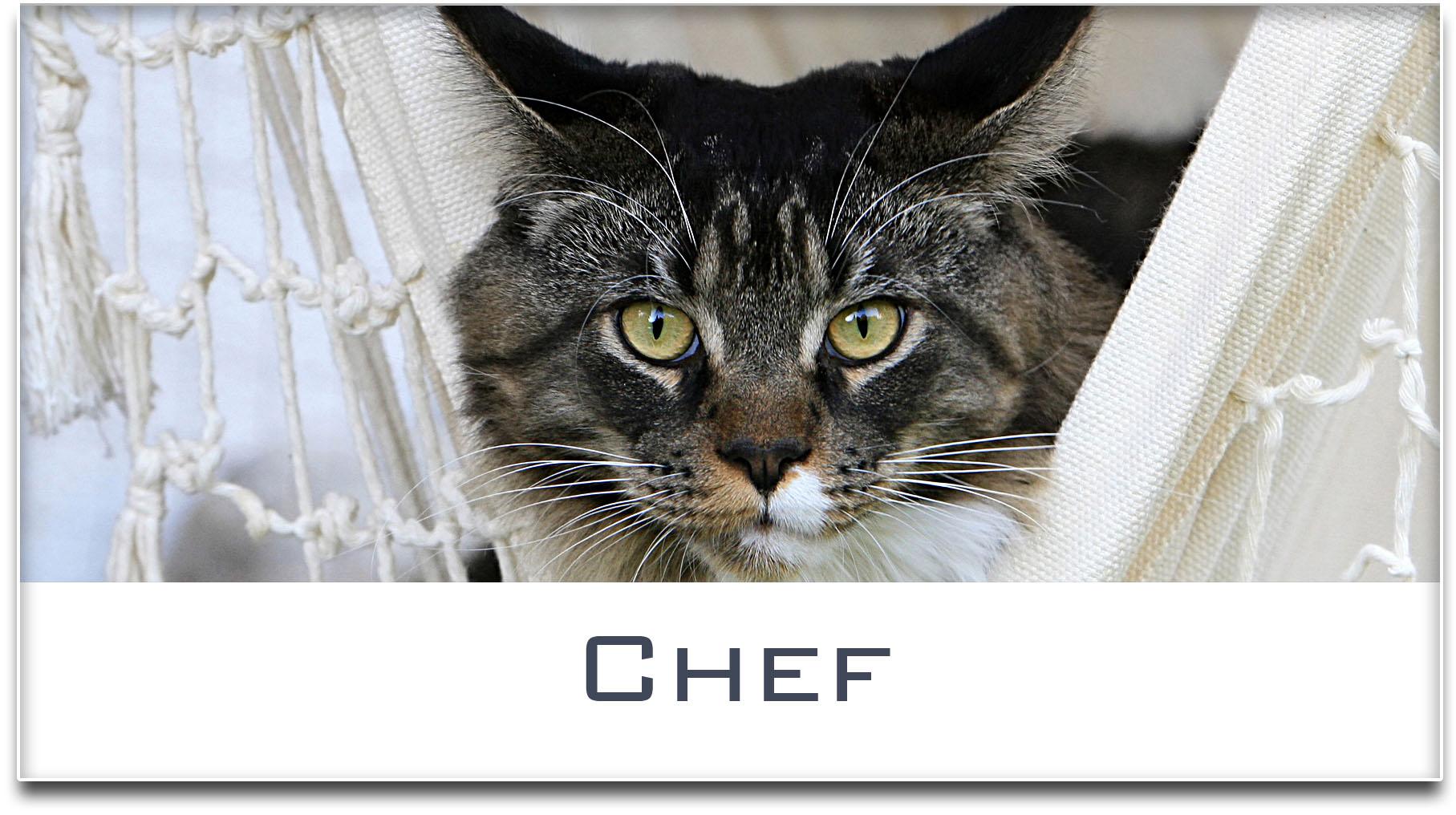 Türschild / Haustürschild / Katze / Chef / Selbstklebend