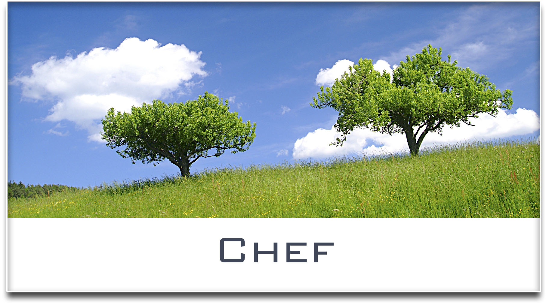 Türschild / Haustürschild / Bäume / Chef / Selbstklebend