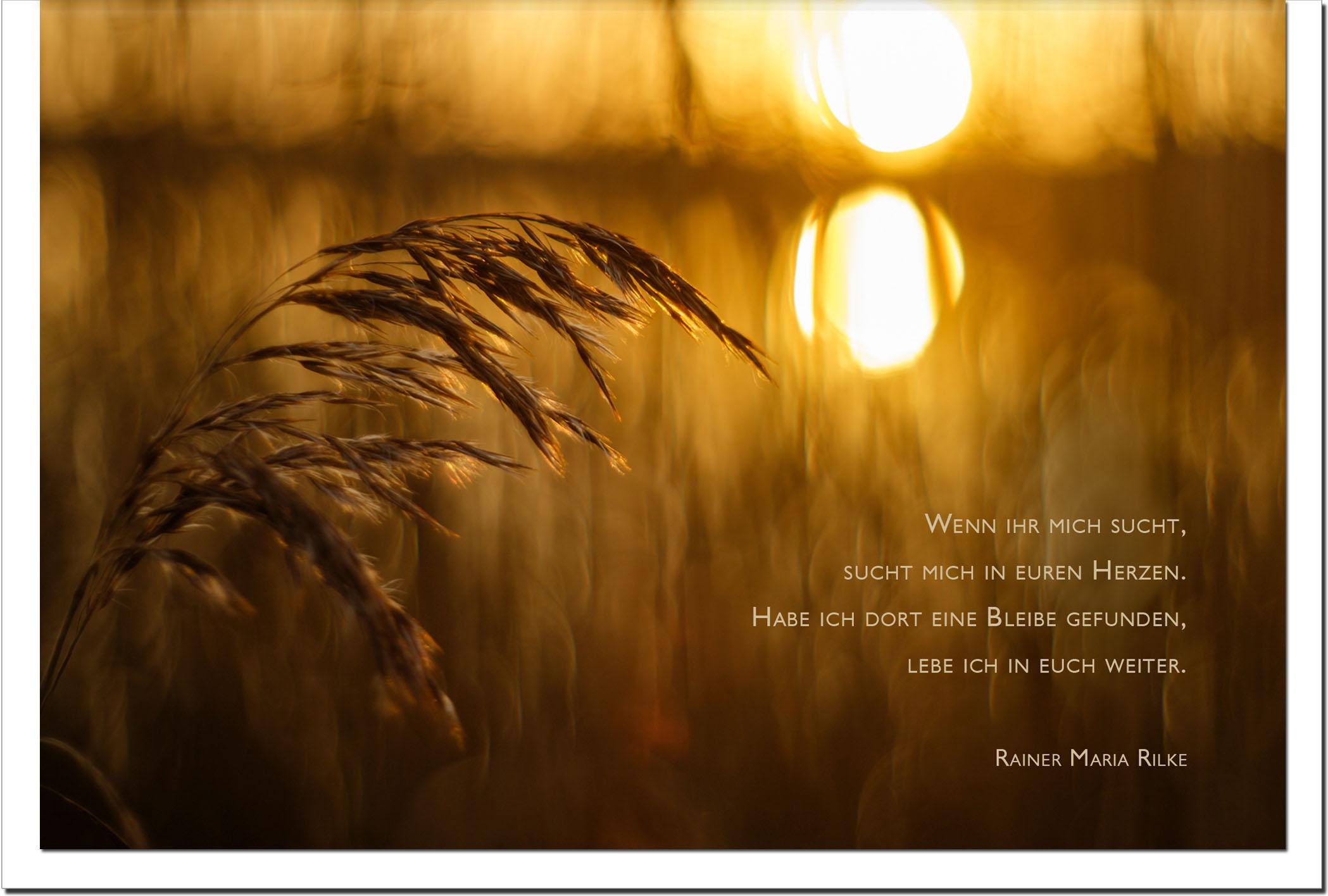 Trauer Trauerkarten Kondolenzkarten / Korn / Sonnenuntergang / Stilvoll Niveauvoll Einfühlsam