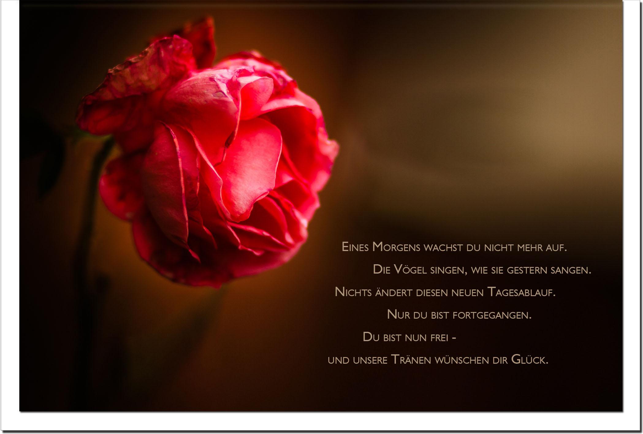 Trauer Trauerkarten Kondolenzkarten / Rose / Stilvoll Niveauvoll Einfühlsam