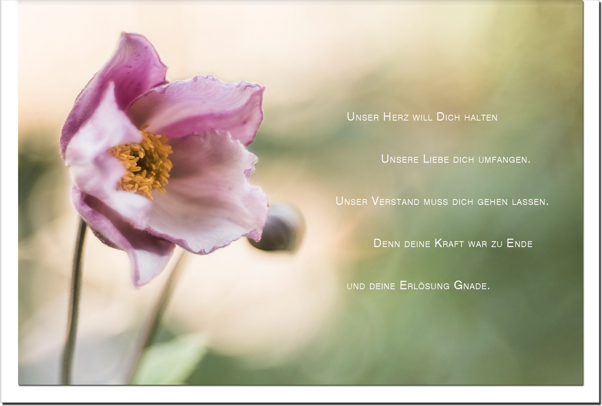 Trauer Trauerkarten Kondolenzkarten / Christrose / Stilvoll Niveauvoll Einfühlsam