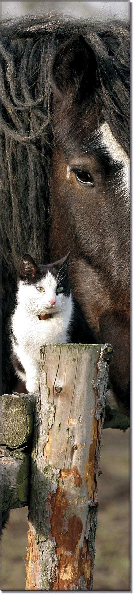 """Metall - Lesezeichen  """"Katze und Pferd"""""""